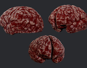 Human Brain Organ Game Ready 03 3D model