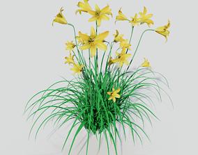 3D model Hemerocallis lilioasphodelus