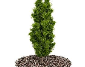 3D Green Garden Bush