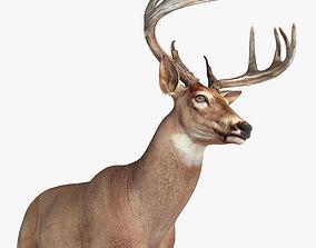 3D model Deer animal