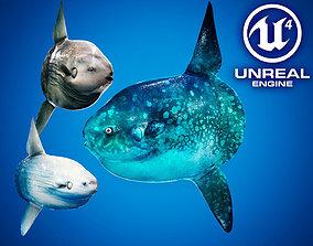 3D asset Ocean Sunfish Pack - UE4