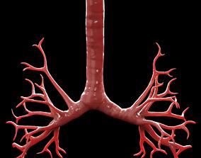 3D asset Human Bronchi