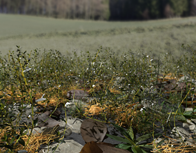 3D Knotweed Meadow Patch