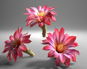 Cactus flower in bloom 3D model