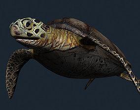 animated 3DRT - Sealife - Turtle