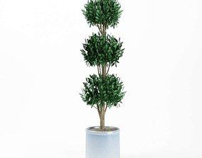 Topiary Faux Potted Tree 3D