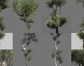 Olive Tree Collection 3D model