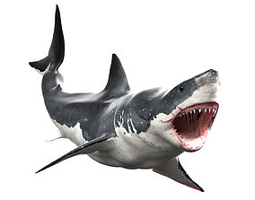 Great White Shark Animated Rigged 3D asset