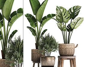 3D model Exotic plants set 457