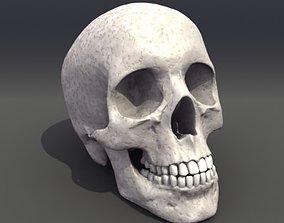 Skull Anatomy cranium 3D