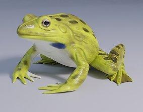 3D model Indian Bullfrog - Animated