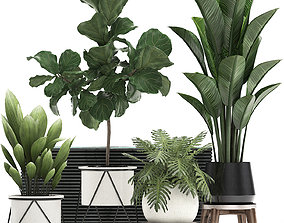 3D model Decorative plants in flower pots for the 1
