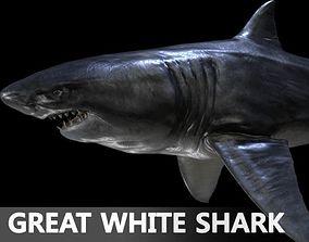 Great white Shark maya 3D