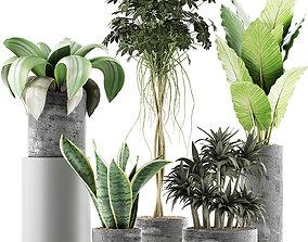 3D model Plants Collection 36