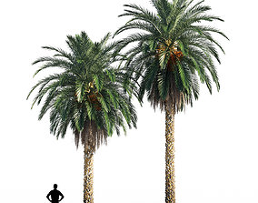 3D model Date palm 2 exotic