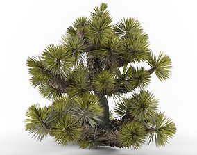 3D Yucca brevifolia