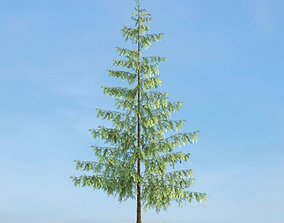 Tall Thin Tree 3D model