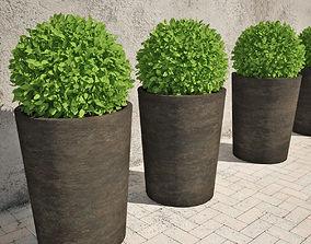 Shrub in Pots 01 3D