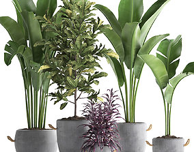 Collection of Exotic Plants 438 3D model