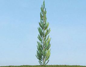 Thin Green Conifer Tree 3D model