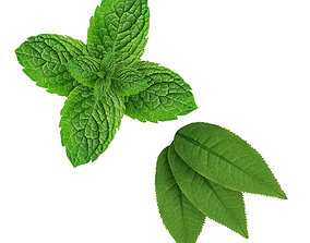 3D Mint leaves