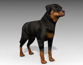3D model Rottweiler Animated
