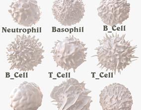 3D model Lymphocytes