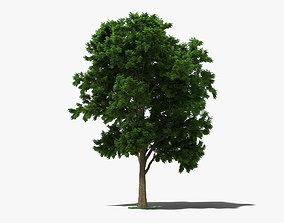 3D model lilac Ash Tree