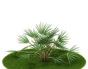 Green Stemmed Shrub 3D model