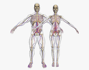 Circulatory System with Skeleton Combo 3DSmax