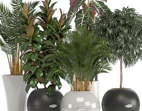 howea collection of plants in pots 3D model