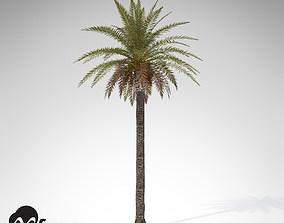 3D XfrogPlants Canary Date Palm