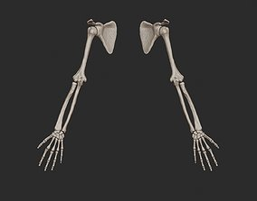 Human Arm Bones High Poly character 3D