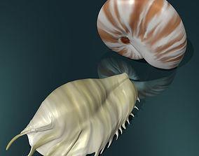 3D asset Realistic shells low poly