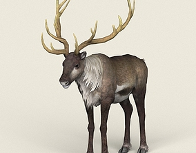 Game Ready Reindeer 3D asset