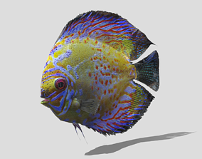 Sweetwater Discus Fish 3D asset