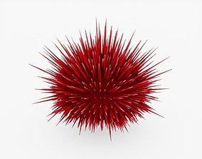 Sea Urchin 3D model