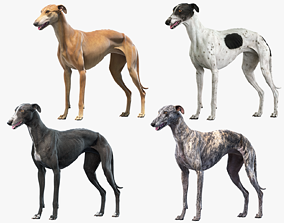 3D model Greyhound Collection