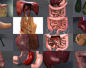 Complete Abdominal Organs 3D