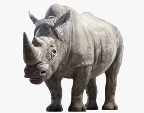 Big White Rhino 3D asset