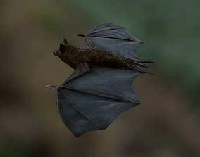 Bat Rigged and Animated 3D asset