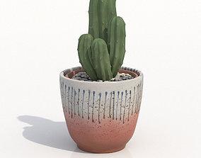 Ritterocereus Potted Cactus Plant 3D
