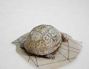 3D animals Turtle