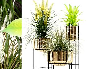 3D Plants collection 146 AGATA