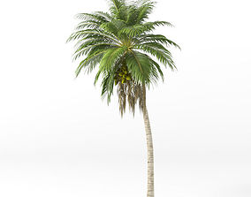 Coconut tree 3D model