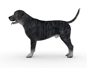 3D animal ANML-025 Dog Animated