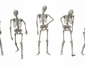 3D asset realtime Skeleton Standing Poses