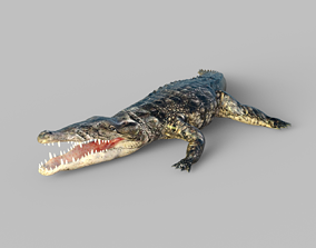 3D model Animated Rigged Crocodile