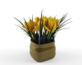 3D crocus yellow