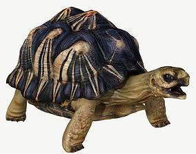 3D Radiated Tortoise